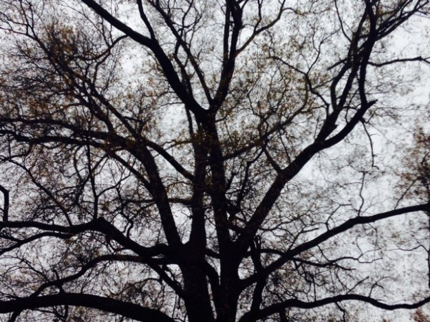 tree-haunt