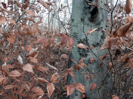 treecarved