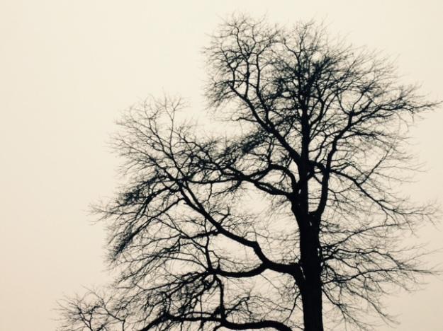 treelover