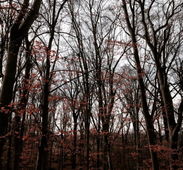 treeslight