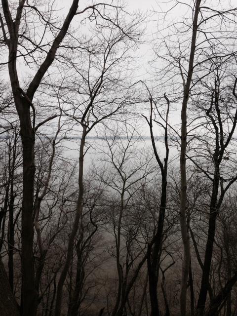 treessecret