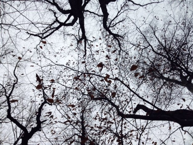 treesup
