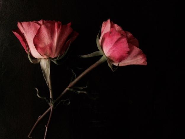 flowersdark6