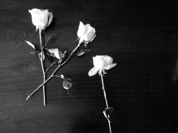roses-black-and-white
