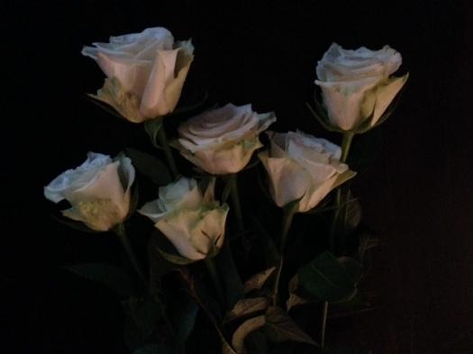 white-roses-3